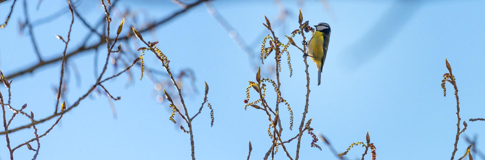 Un oiseau sur une branche d'arbre